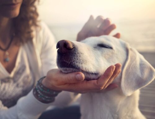 CBD for Pets: Why It's Effective, How It's Used, and More